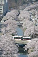 市中心部を流れる松川沿いの桜並木=2014年4月8日、富山市の桜橋周辺、寺脇毅撮影