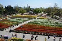 チューリップで描かれた北陸新幹線の地上絵を楽しむ来場者たち=2015年4月23日、富山県砺波市花園町、寺脇毅撮影