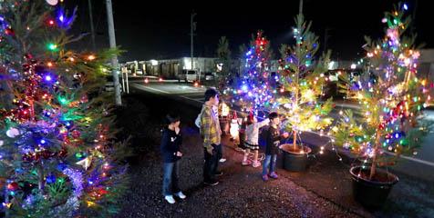2016年11月19日 益城町テクノ仮設団地内に設置され、点灯したクリスマスツリー