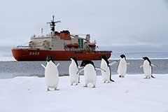 観測船「しらせ」から上陸、アデリーペンギンたちが出迎え