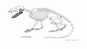 写真:「ササヤマミロス・カワイイ」の骨格想像図=イラスト・小田隆さん、兵庫県丹波市制作