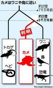 図:カメはワニや鳥に近い