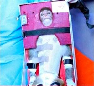 写真:体に密着した防護服姿で固定され、ロケットに乗せられる猿。イランの国営英語放送局の映像から=ロイター