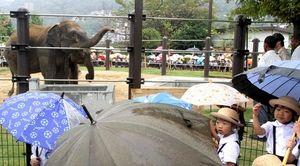 写真:一般公開が始まった2頭のスリランカゾウを見る園児たち=山口県周南市の徳山動物園