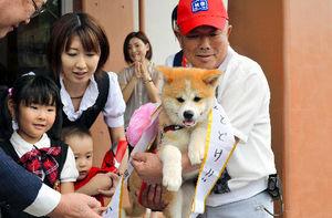 写真:ロシアに渡った秋田犬「ゆめ」=昨年7月、秋田県大館市