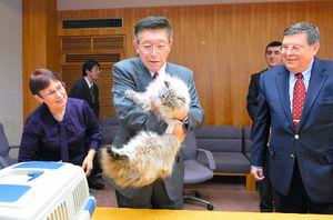 写真:プーチン大統領から贈られたシベリア猫を抱く佐竹敬久・秋田県知事(中央)=秋田県庁、代表撮影