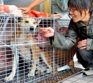 写真:保護された迷い犬。右は動物保護団体の女性=29日午後、静岡県小山町の須走口登山道5合目、長尾大生撮影