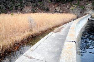 写真:馬の背島の耕作放棄地にはアシが生えている。ここを守るためとして防潮堤を再建する計画を宮城県が進めている=宮城県塩釜市、青木美希撮影