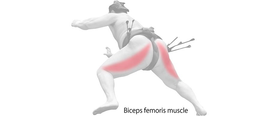 Biceps femoris muscle