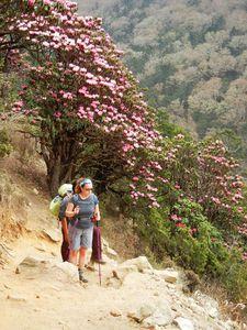 テンガからタンボチェに向かう急な坂。シャクナゲが美しい。「シャクナゲ街道」と呼ぶことにしました