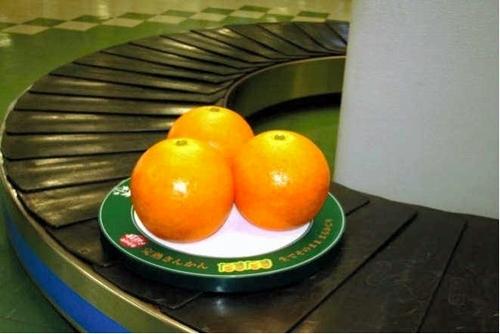 写真:キンカンの模型=宮崎空港、宮崎県提供