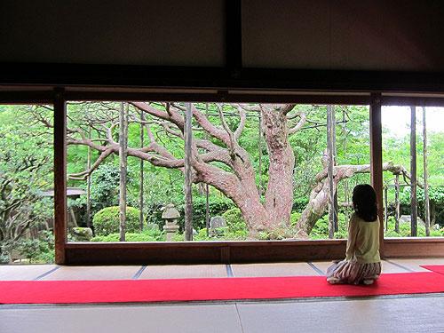 写真:宝泉院の庭は柱越しに見る