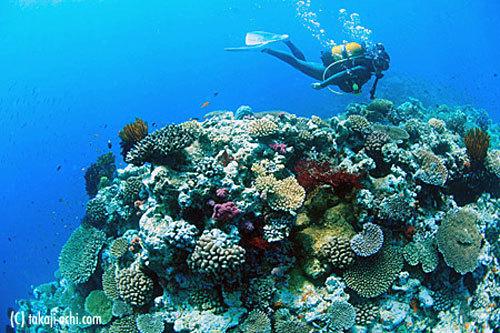 写真:世界自然遺産に指定された、ニューカレドニアのサンゴ礁。ヤンゲンの海中で