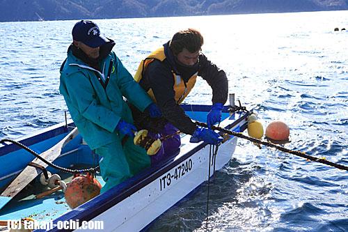 写真:海中に張られた土台のロープに、ワカメの種の付いた糸を巻き付ける作業を行う