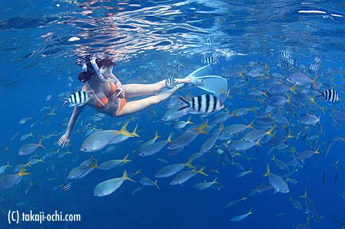 写真:セメタリーでは、こんな熱帯魚の群れに囲まれることも