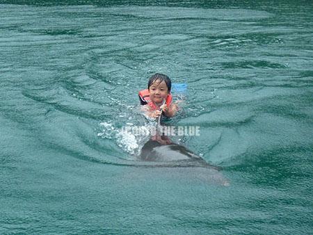 写真:イルカの背びれにつかまって泳ぐ長男