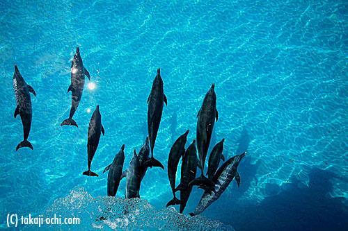 写真:べた凪で、船の船首についたイルカたちを、船上から撮影。海底にイルカたちの影が映る