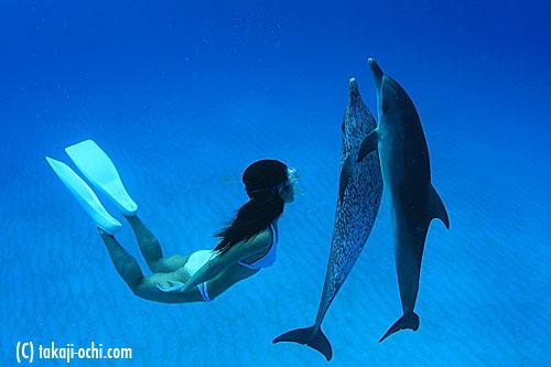 写真:スキンダイバーの泳ぎに合わせて、こんな風に一緒に泳いでくれる