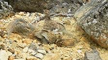 長野)北アルプス乗鞍岳でライチョウが砂浴び