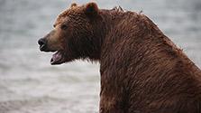 極北の地に魅せられた写真家 故星野道夫の旅路をたどる