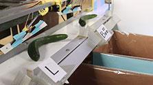 キュウリ仕分けにAI、忙しい母への愛 静岡の農家開発