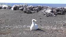 西之島にカツオドリ・昆虫・ダニ… 上陸調査の結果発表