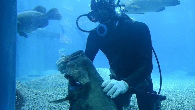 【動画】ダイバーの吉国卓哉さんのマッサージに、魚たちはメロメロ?=多鹿ちなみ撮影