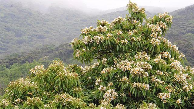 【動画】百花繚乱 競うように咲き誇る奄美の梅雨=外尾誠撮影