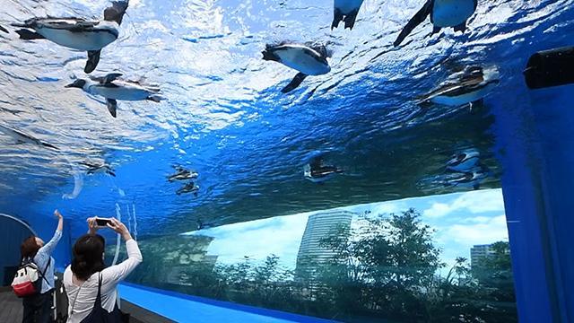 ペンギン宙を飛ぶ? サンシャイン水族館「世界初」展示