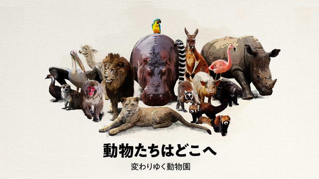 余るライオン「猫より安い」 動物交換、その実態は