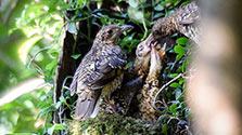 鹿児島)奄美企画③貴重な鳥の宝庫 子育ての季節