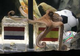 写真:ドイツのオーベンハウゼンの水族館で9日、スペインが優勝と予想したタコのパウル=ロイター
