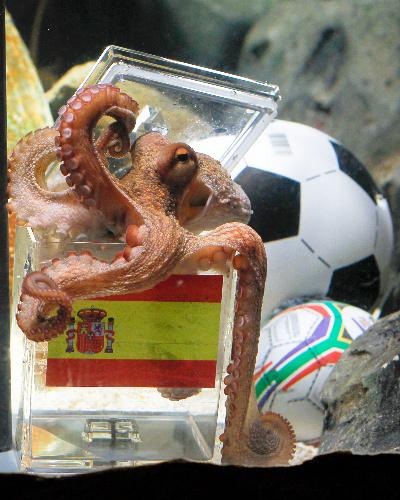 写真:9日、決勝戦の予言でスペインを選ぶパウル=ロイター