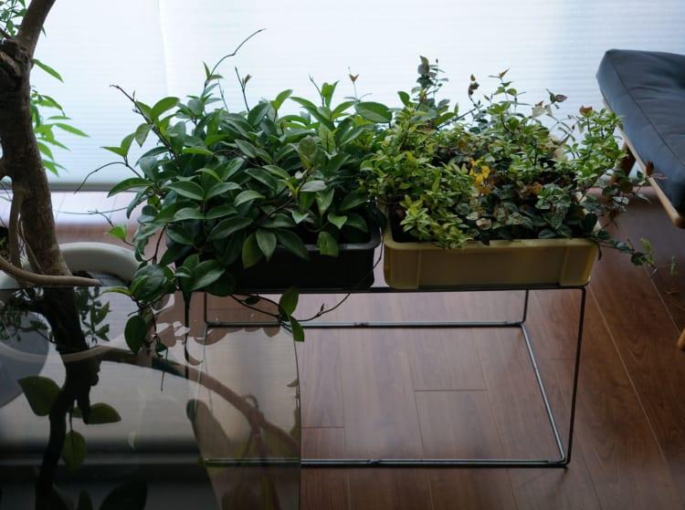 サンボックス専用の台を作り(サンプリングファニチャー コンテナー)、植物入れとしたもの。室内にグリーンを取り込みたい方にオススメ。写真は我が家。日中はベランダにコンテナ部分のみを出して水やり。4日くらいの出張では、このサンボックス自体に水を3センチくらいためて
