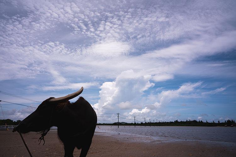 """""""暮らしに溶け込む""""感覚の島巡り 何度訪れても楽しめる沖縄の旅(後編)"""