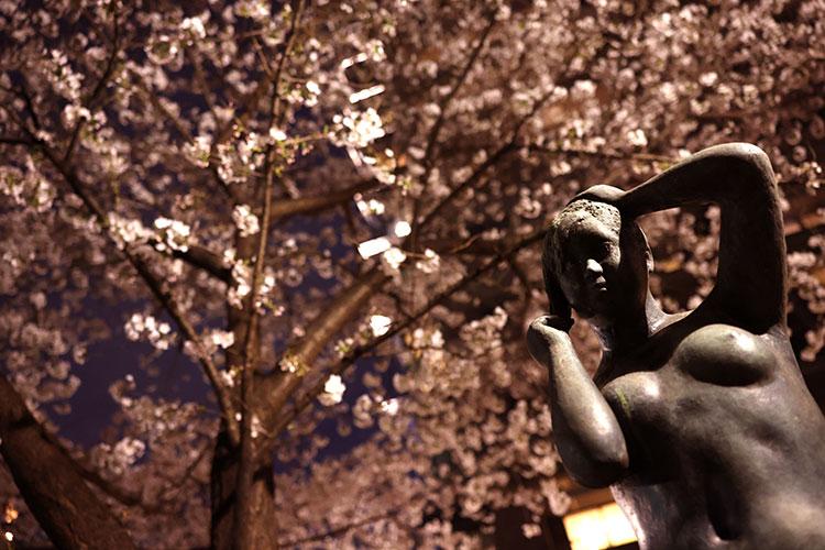 【最終回】これまでの写真と生き方を振り返り、「今年の桜、東京の夜桜を撮りたい!」