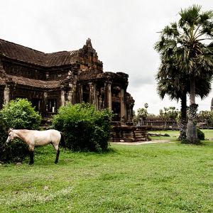 東南アジアの草木に囲まれたたずむアンコールワット遺跡