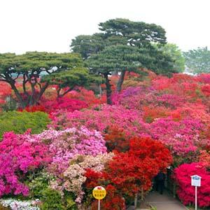 日本遺産の「里沼」に育まれたツツジ咲く城下町 群馬県・館林市