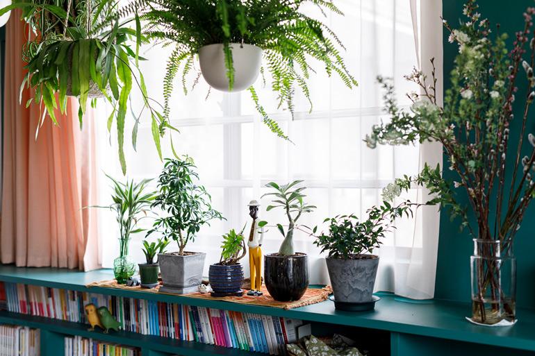 光の入り方が奇麗な窓辺。カーテンのピンクも壁のグリーンとの相性も意識して決めた