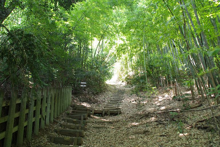 散策の遊歩道が整備されていて歩きやすい