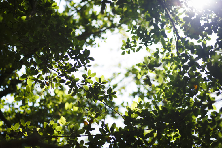 今年も静かに深まる緑 店々の軒先は初夏をつぶやく〈番外編〉