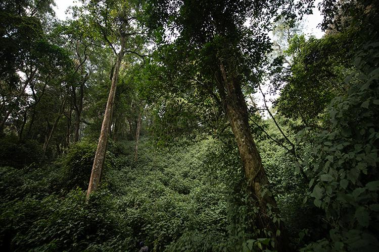 森の中の道なき道を進む