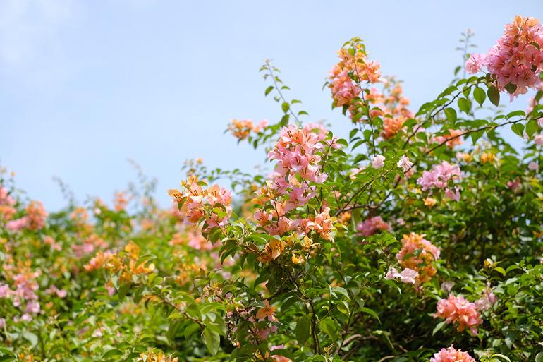 コロナ禍でもスリランカの自然は元気
