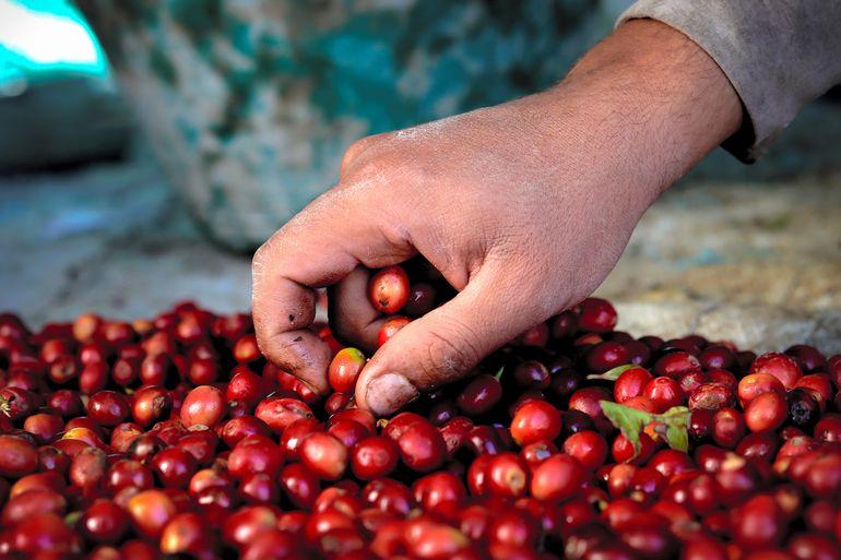 世界最悪の人道危機国「イエメン」で出会った極上のコーヒー