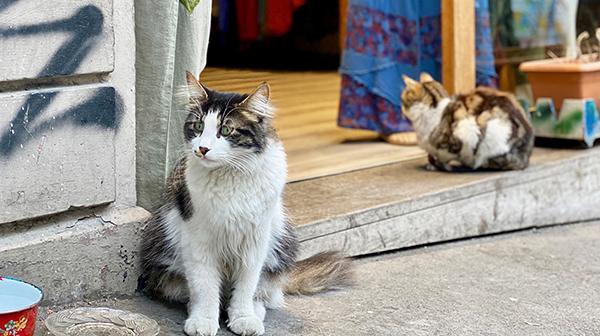 たっぷりの朝食と猫に会える街 イスタンブール