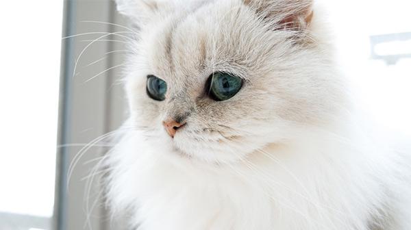 脫サラ、起業。それが愛。愛貓みるちゃんとの生活