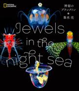 夜の海にあらわれる、七色に輝く不可思議な世界