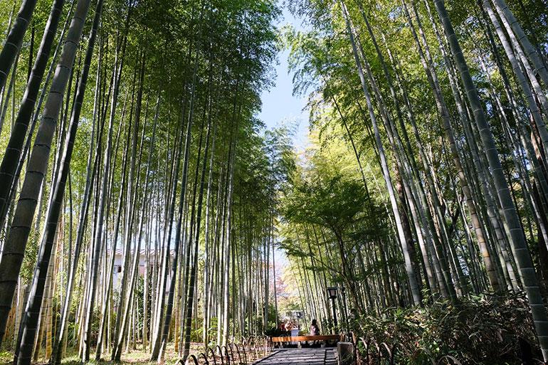 修善寺が「小京都」と言われる理由の一つに、この竹林があるのかなと思う。私は関西出身なので京都にもよく遊びに行くのだが、京都にはこういう竹林がたくさんあって趣がある。修善寺の竹林は風情があり、あまり混雑しないので散歩コースには最適。ついつい写真を撮ってしまう