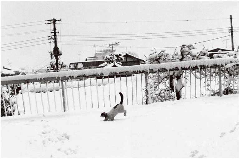 妻・陽子が子宮肉腫により亡くなって、荒木は悲しみに暮れていた。東京に大雪が降った日、愛猫・チロが雪の中でジャンプした。「生きろ」と言っているように感じた