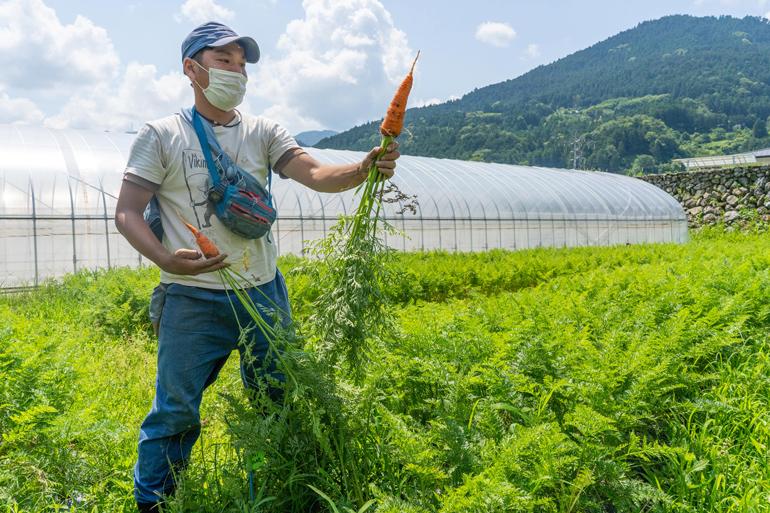 「つなぐ農園」でにんじんを収穫する松本直哉さん